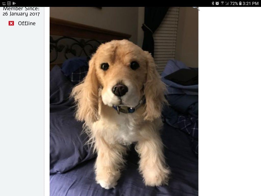 Screenshot_20181113-152135_Chrome.jpg